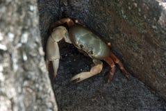 在土地的螃蟹 免版税库存照片