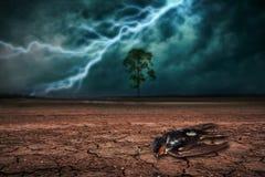 在土地的死的鸟地面干燥破裂和大树的 免版税库存照片