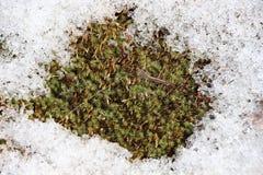 在土地/春天风景一个多雪的被解冻的补丁的绿草/ 免版税库存照片