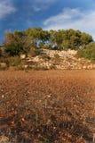 在土坎的结构树 免版税库存图片