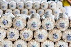 在土壤和锯木屑的蘑菇耕种 免版税图库摄影