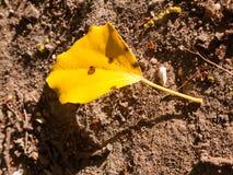 在土壤地板上的一朵唯一黄色花根据天 库存图片