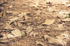在土壤地板上的Falled干燥叶子与葡萄酒过滤器 库存照片