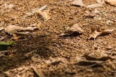 在土壤地板上的Falled干燥叶子 免版税图库摄影