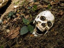在土壤埋没的人的头骨 头骨有土附加头骨 死亡和万圣夜的概念 免版税库存照片