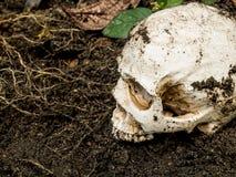 在土壤埋没的人的头骨旁边 头骨有土附加头骨 死亡和万圣夜的概念 库存图片