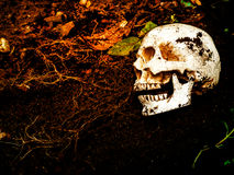在土壤埋没的人的头骨旁边 头骨有土附加头骨 死亡和万圣夜的概念 库存照片