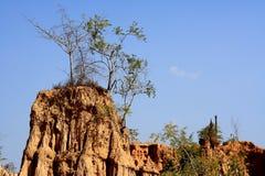 在土壤柱子圣地声浪Na Noi的树在楠府,泰国 库存照片