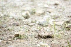 在土壤的岩石 免版税库存照片