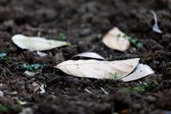 在土壤的干燥叶子 免版税图库摄影