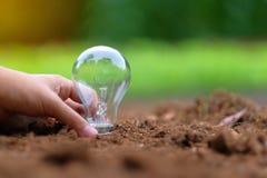 在土壤的电灯泡有绿色背景 生态和挽救能量概念 库存照片