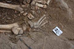 在土壤的真正的人的头骨 库存照片