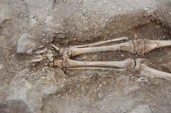 在土壤的真正的人的头骨 免版税库存照片