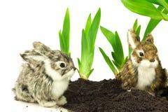 在土壤的逗人喜爱的兔子与绿色植物 库存图片