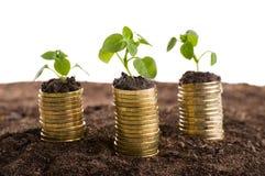 在土壤的金黄硬币与年幼植物 免版税库存图片