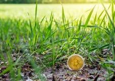 在土壤的Bitcoin 库存图片