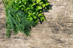 在土气木桌上的新鲜的绿色莳萝和荷兰芹草本 免版税图库摄影