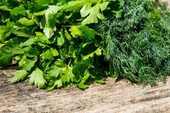 在土气木桌上的新鲜的绿色莳萝和荷兰芹草本 免版税库存图片