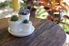 在土气木桌上的仙人掌花瓶 免版税库存图片
