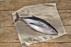 在土气木的长鳍金枪鱼 免版税图库摄影