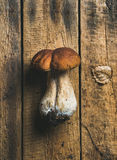 在土气木背景的新鲜的未煮过的白色森林蘑菇 库存图片