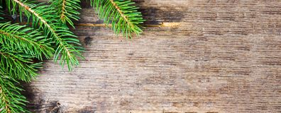 在土气木背景的杉树分支 免版税库存图片