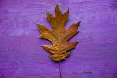 在土气木背景的橡树叶子 橡树叶子 免版税库存图片