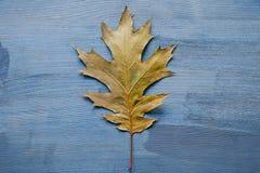 在土气木背景的橡树叶子 橡树叶子 库存照片