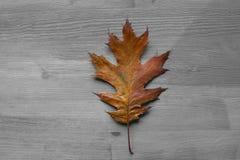 在土气木背景的橡树叶子 橡树叶子 库存图片