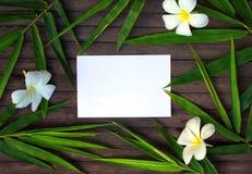 在土气木背景的竹叶子框架 在竹叶子的白纸卡片和赤素馨花开花 免版税库存图片
