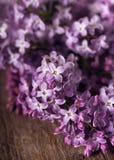 在土气木背景的紫色淡紫色开花 免版税图库摄影