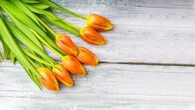 在土气木背景的郁金香 免版税库存照片