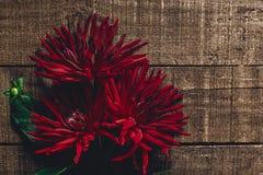 在土气木背景舱内甲板位置的美丽的大丽花翠菊 r 图库摄影