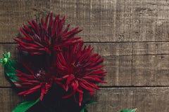 在土气木背景舱内甲板位置的美丽的大丽花翠菊 r 免版税图库摄影