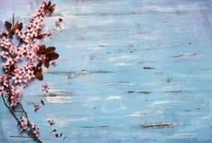 在土气木backkground的樱花 免版税库存照片