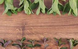 在土气板,健康生活方式,文本的拷贝空间的新鲜的自然绿色薄荷叶 免版税图库摄影