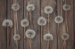 在土气样式的花卉纹理 蒲公英和木头 库存图片