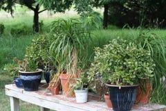 在土气桌上的室内植物 库存照片