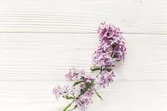 在土气白色木背景上面vi的美丽的淡紫色花 免版税库存照片