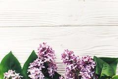 在土气白色木背景上面vi的美丽的淡紫色花 库存图片