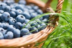 在土气篮子关闭的新近地摘的蓝莓  绿色gras 库存图片