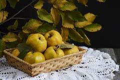 在土气背景的很多苹果柑橘 顶视图 图库摄影