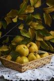 在土气背景的很多苹果柑橘 顶视图 库存图片