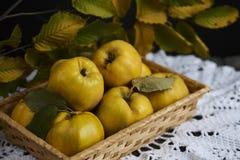 在土气背景的很多苹果柑橘 顶视图 免版税图库摄影