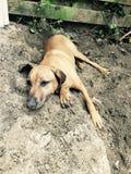 在土的狗 库存图片