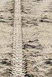 在土的轮胎跟踪 免版税库存照片