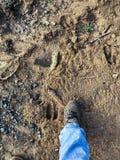 在土的麋轨道由人起动 免版税图库摄影