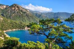 在土耳其的南部的海岸的杉树 免版税库存图片