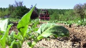 在土豆下庄稼的耕种土地  股票录像
