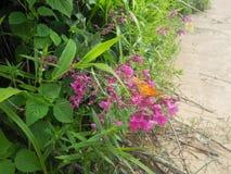 在土足迹的野花 库存图片